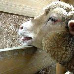 Mr.Children「羊、吠える」パッとしない自分を感じたときに最強の曲
