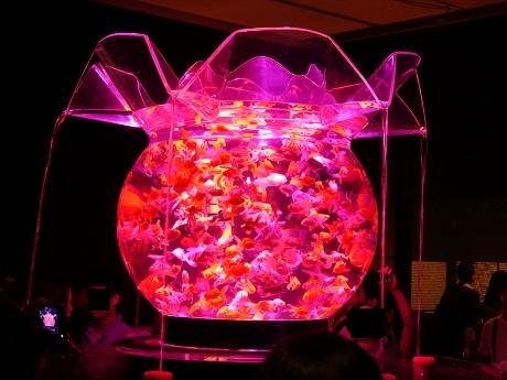 アートアクアリウム 21世紀美術館 花魁2
