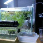 メダカ水槽の消灯は夜ご飯から2時間以上あとで!