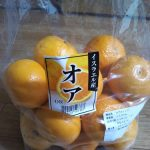 コストコで買ったイスラエルのオレンジ「オア」が食べやすくておいしい!